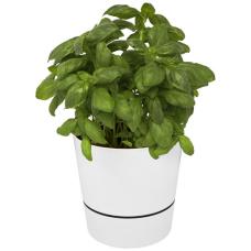 Pojedyczna doniczka kuchenna Herbs